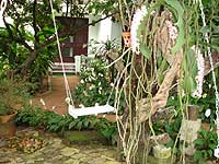Exotic plants and orchids shade the entrance to the villa rooms