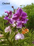 malaysia holidays-borneo orchid