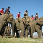 Vietnam Highlands Elephant Festival in Buon Don Village
