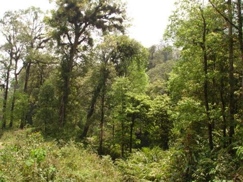 Vietnam-bat-xat-village-forest